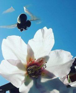 Φυτώρια Φαληράκι, ανθοκομικά Φαληράκι, δενδροκομικά Φαληράκι, αγροτικά προιόντα Φαληράκι, γεωργικά προιόντα Φαληράκι, γεωπονικά προιόντα Φαληράκι, Ανθοκομικό Κέντρο Μανωλάς. Fytwria Falirakh,